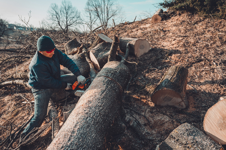 Harvesting firewood for winter, a man in glasses cut a tree by chainsaw holding it in his hands Stock Photo
