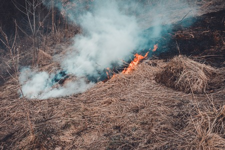 Fungal grass and smoke that spreads through the earth are very dangerous to human health Stock Photo - 127010139
