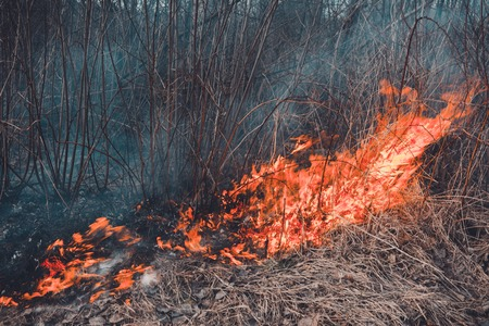 The field burns dry grass, is environmentally hazardous, pollution of the environment and air, the destruction of flora 2019 Stock Photo - 125726841