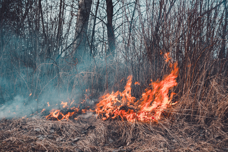 The field burns dry grass, is environmentally hazardous, pollution of the environment and air, the destruction of flora 2019