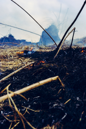 The grass is burning, the fire of which destroys everything in its path 2019