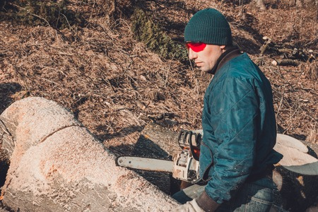 A logger cutting a tree with a chainsaw, preparing firewood for the winter 2019