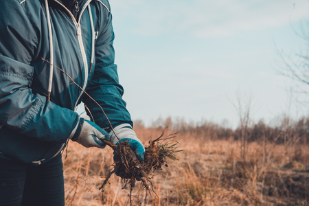 A woman in her hands against the sky holds a young tree dug up with roots. 2019 Standard-Bild - 122881328