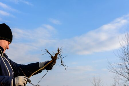 A woman in her hands against the sky holds a young tree dug up with roots.