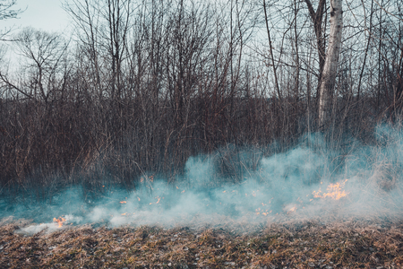 Fungal grass and smoke that spreads through the earth are very dangerous to human health 2019