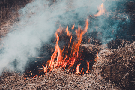 Fungal grass and smoke that spreads through the earth are very dangerous  human health