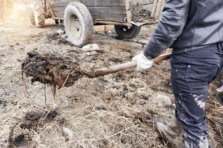 Une femme et un homme près de l'étable à vaches choisissent du fumier dans une fosse pour fertiliser le sol du jardin, l'action se déroule dans le village. 2019
