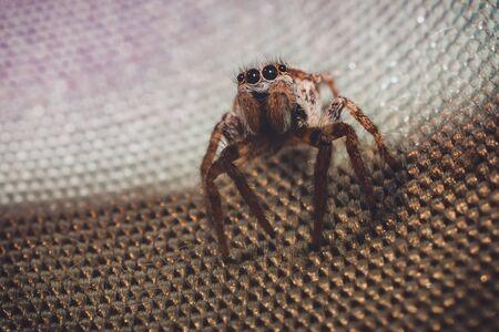 Spider macro photography. 2019