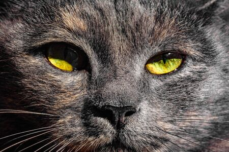 Dark gray cat with yellow eyes looks straight into the camera against a blue sky. 2019