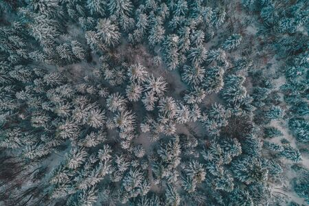 Aerial view of winter forest, trees covered with snow.2020 Standard-Bild