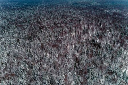 Picturesque winter forest, snow-covered Christmas trees, top view.2020 Фото со стока