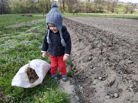 Little girl helping to plant potatoes in the village, mom with baby on the field. 2019
