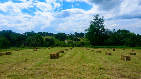 Dried grass and bales in the field, pressed hay in the field. 2021