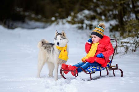 Cute little girl sitting on a sled, with her Siberian Husky, a pet with a child.new