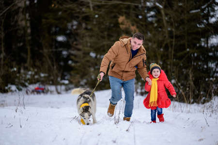 Husky in a yellow scarf with the owner and his daughter, walking in the winter forest.