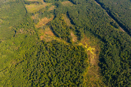 Top view of the Ukrainian forests in the Rivne region, flying over the tunnel of love. new Banque d'images