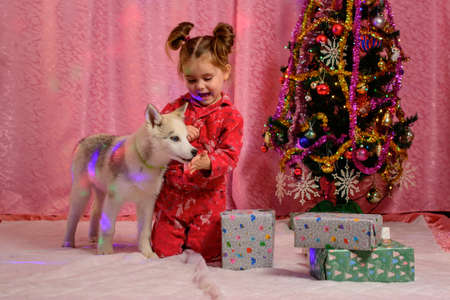 Cute little girl with a husky puppy playing near the Christmas tree, New Year's photography of a child with a dog. new