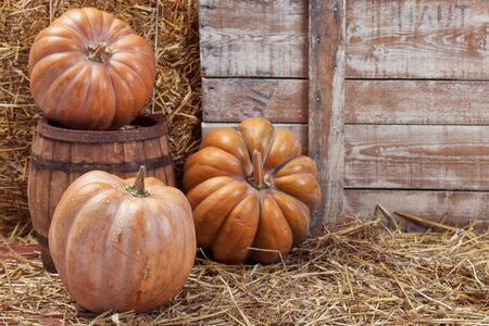 Autumn Pumpkin Thanksgiving Background . Orange pumpkins over wooden table.Pumpkins and straw in old barn