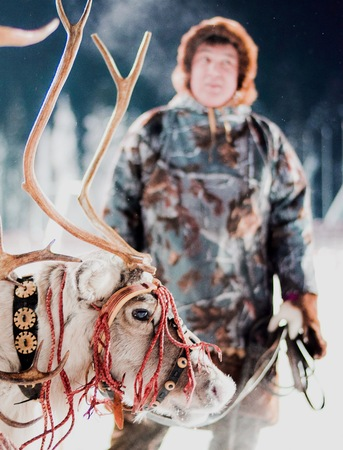 Deer in the Siberian winter forest with reindeer herder Editorial