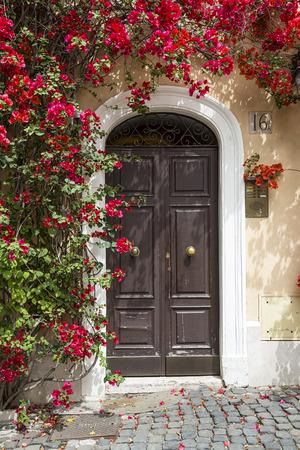 bougainvillea flowers: Old door