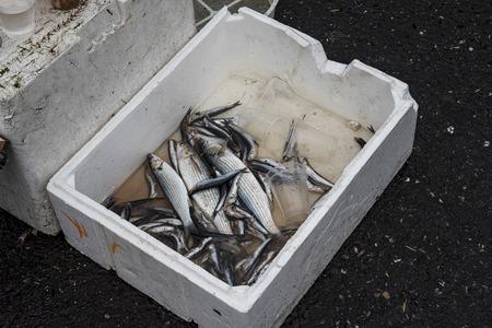 rotten: Rotten fish Stock Photo