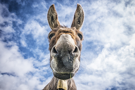 face to face: Donkey face