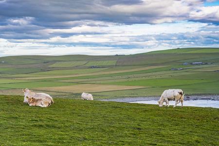 Scottish countryside Stock Photo