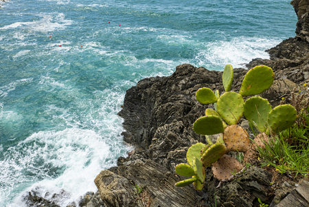 prickly pear on a cliff