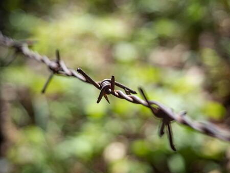 Close-up of a barbed wire