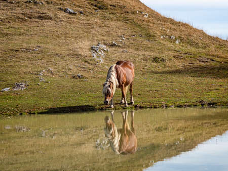 Horse mirroring in a pond 写真素材