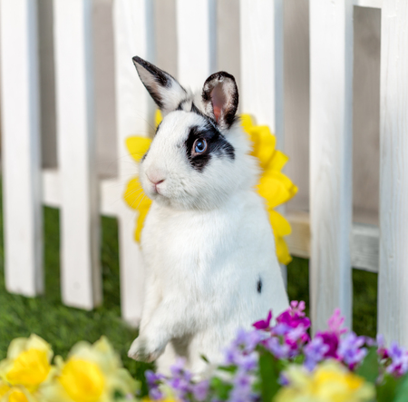 rabbit standing: Black and white rabbit standing on hind legs in the garden with flowers and green Stock Photo