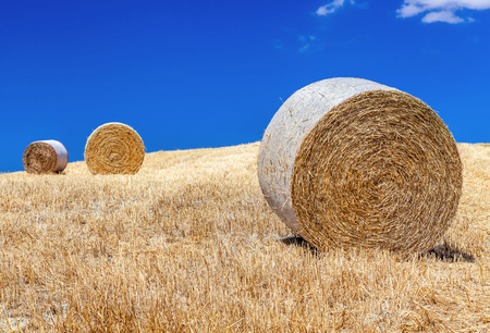 europe closeup: Rural landscapes of Tuscany, Italy, Europe. Round bales of hay in a field on a hill closeup. Agriculture.