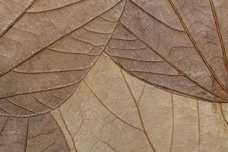 hojas secas: La textura de las hojas secas del primer plano. fondo de primavera