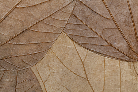 dry leaves: Texture of dry leaves close-up. Spring background Stock Photo