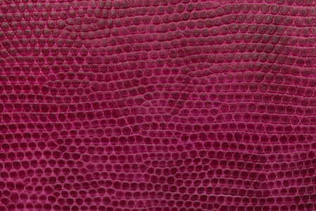 maroon leather: Bright magenta leather texture background. Closeup photo. Reptile skin. The skin of a crocodile or a snake,
