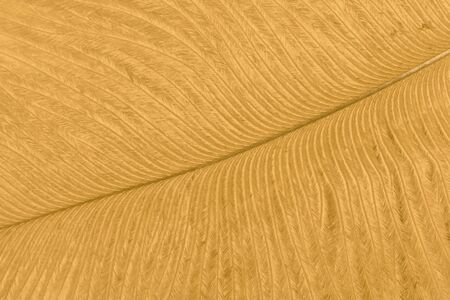 Texture of golden ostrich feather closeup. Abstract yellow background. Stockfoto