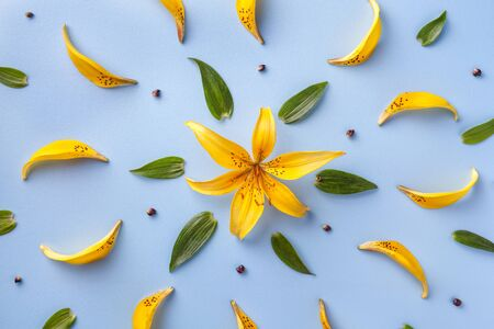 Floral pattern of yellow petals of lilies and green leaves. Flower background on a light blue paper, flat lay. Nature backdrop, macro. Stok Fotoğraf