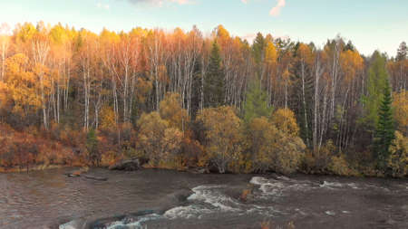 Stream of mountain river and fall forest. Beautiful autumn nature landscape at sunset. Flow water with rapids and cascade.