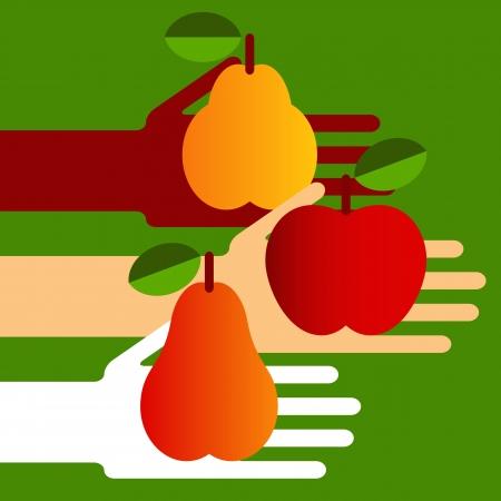 quince: Hands full of ripe fruit  Illustration