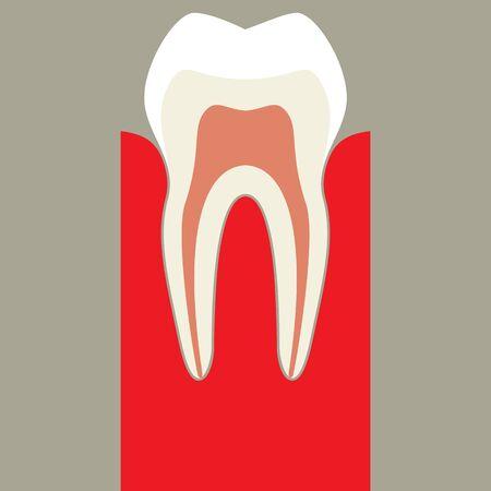 Teeth Stock Vector - 17151442