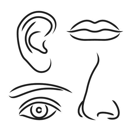Illustrazione vettoriale naso, orecchie, bocca e occhi