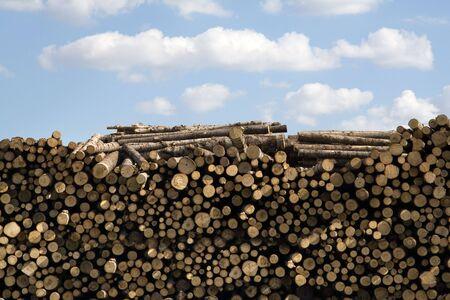 Holz Protokolle aufgestapelt im Holz yard  Standard-Bild - 1149241