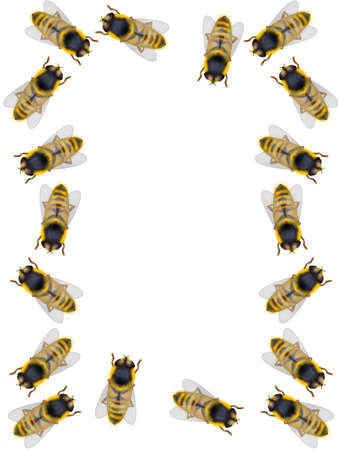 diligence: Frame from bees on a white background Stock Photo