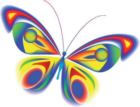 The tropical multi-coloured butterfly with beautiful wings
