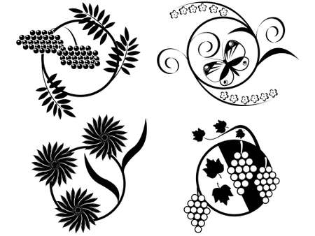 Flower, the  and berries - contours in a vector