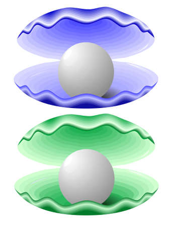 mollusc: Bowl with pearls in a vector on a white background