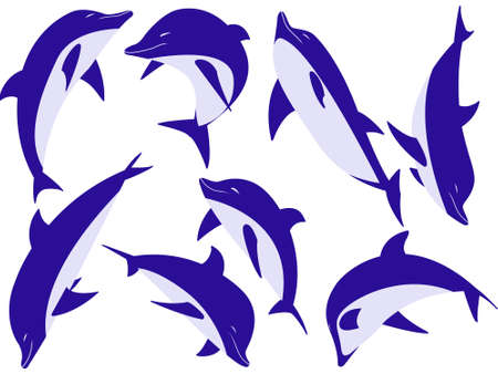 trained: Sea animal dolphins on a white background
