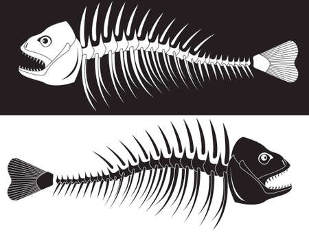 skeleton fish: Bones of a skeleton of fish Illustration