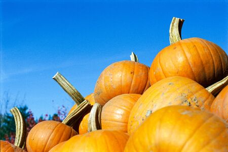 A Stack of Pumpkins with a Blue Sky in the Background