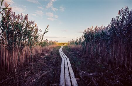 Cape Cod Boardwalk Through Reeds to the Sea